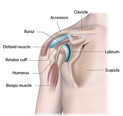Shoulder joint structure